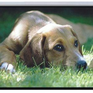 Buy Brateck-PSBC72-Brateck Auto-lock Manual Projection Screen-72''(1.45X1.10M) /(4:3 Ratio)